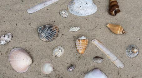 Viele unterschiedliche Muscheln am Strand symbolisieren die Unterschiedlichkeit von Menschen